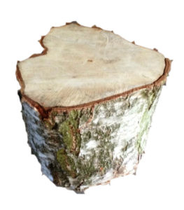 boomstam tafels, boomstam tafel, boomstam bijzettafeltje, boomstam bijzettafels