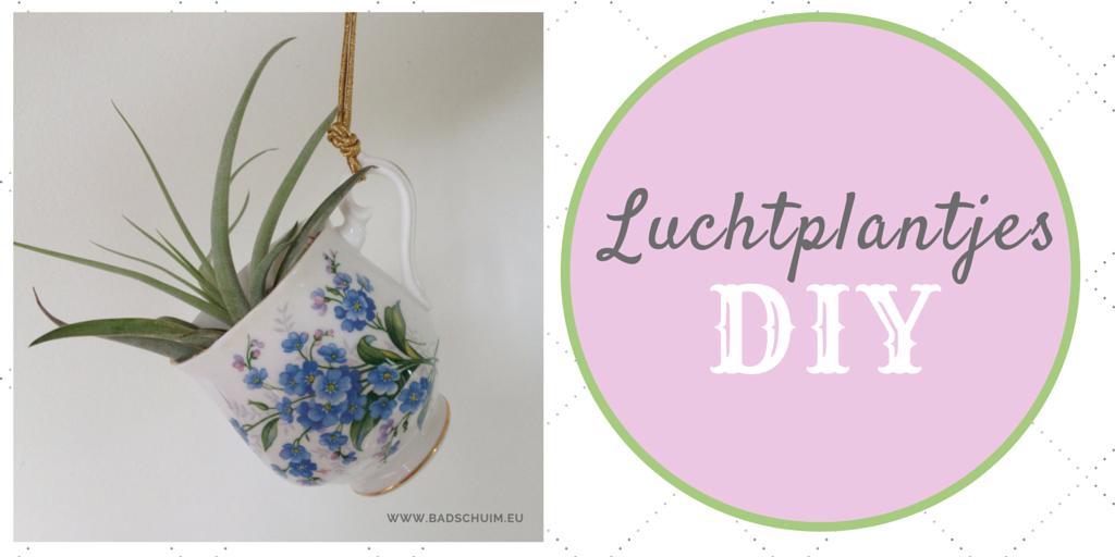Luchtplantjes DIY zelf maken I gemaakte door het creatieve lifestyle blog Badschuim