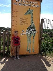 Dagje safari