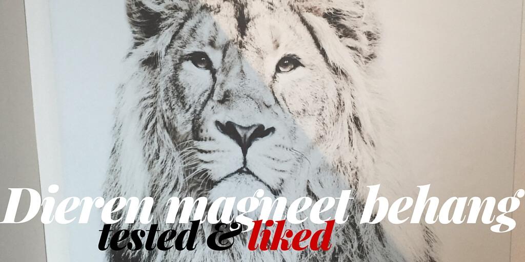 Bij ons woont tegenwoordig een leeuw in huis! Eentje die waakt over onze kunstwerken. Nieuwsgierig?! Kom dan gauw ons dieren magneet behang bekijken!