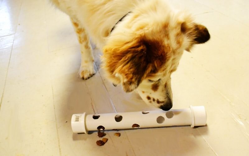 snoepjesbuis hond